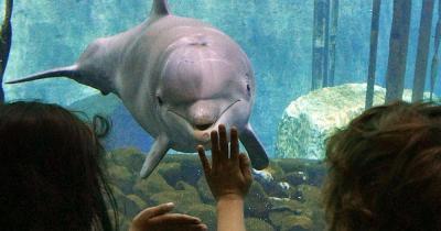 Tiergarten Nürnberg - Delphin