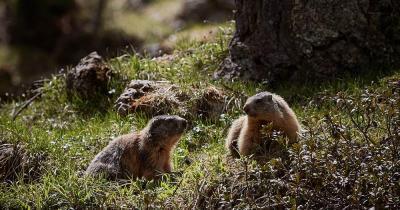 Wildpark Peter und Paul / zwei Murmeltiere