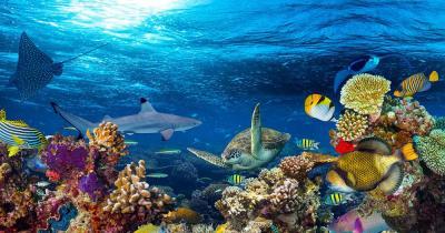 Malediven - Farbenfrohe Unterwasserwelt