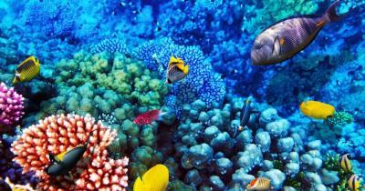 Sharm el Sheikh - Korallenriff im Roten Meer