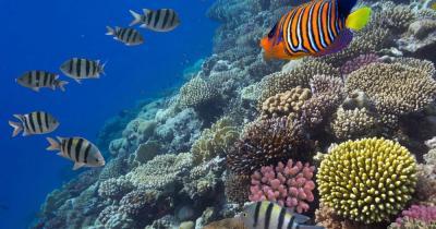 Britische Jungferninseln - Herrliches Tauchrevier