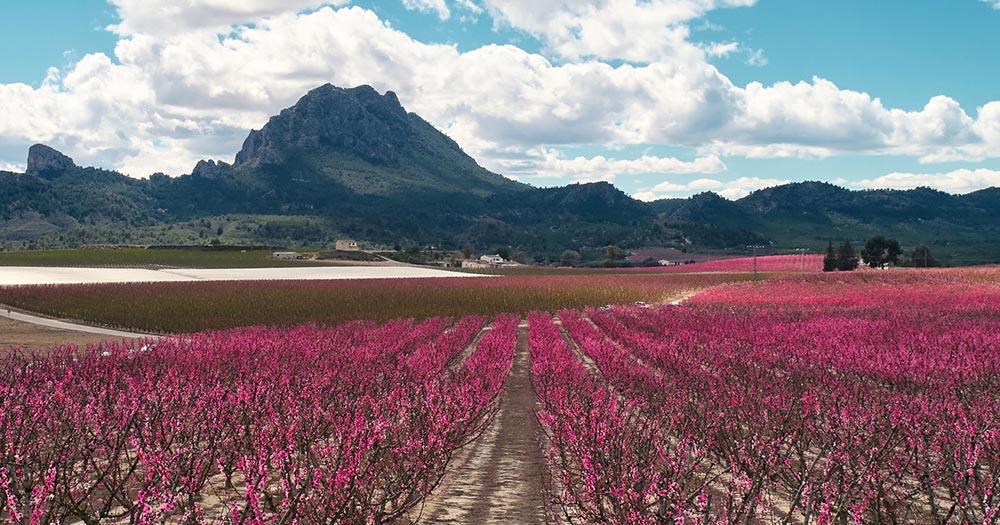 Murcia - Panorama Aufnahme von Blüten