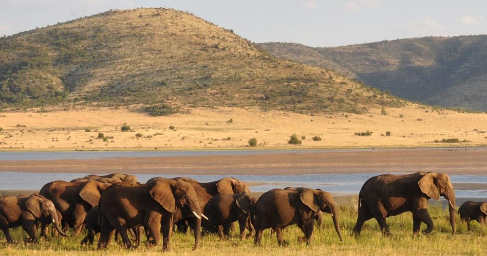Tansania - Elefantenherde
