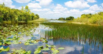 Everglades - Wasserpflanzen