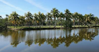 Fairchild Tropical Botanic Garden - Palmen Spiegelung
