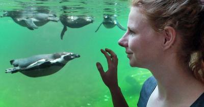 Tiergarten Nürnberg - Pinguine