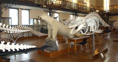 Ozeanographisches Museum von Monaco - Ausstellung
