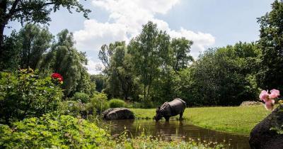 Tierpark Hellabrunn - Panzernashorn