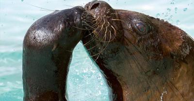 Tierpark Hellabrunn - Seelöwen