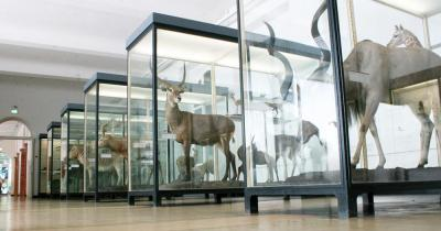 Senckenberg Museum - Urzeit Exponate