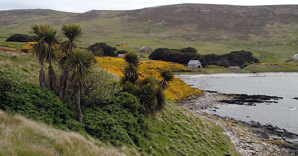 Falklandinseln / Insel der Falklands