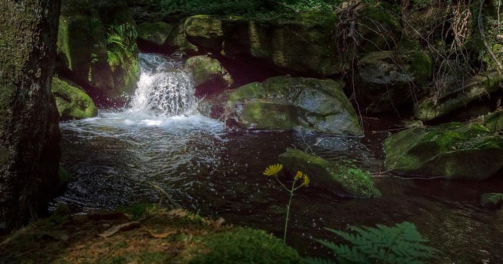 Spiegelau /  Wasserfall und Bachlauf in der Steinklamm bei Spiegelau im bayerischen Wald
