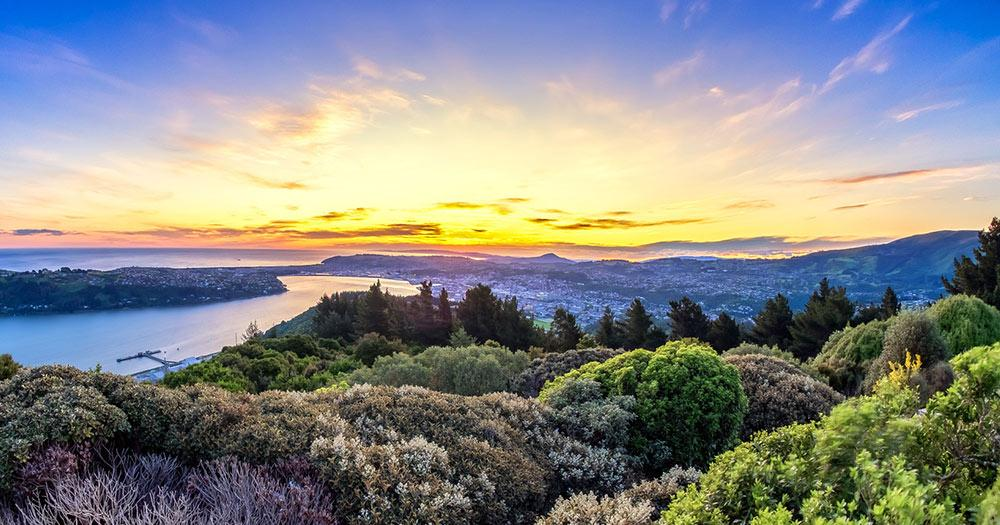 Dunedin / Dunedin