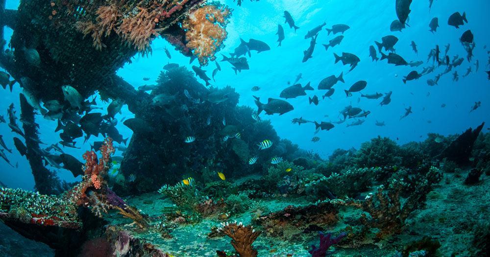Lombok - Unterwasserbild bei der Gili Insel