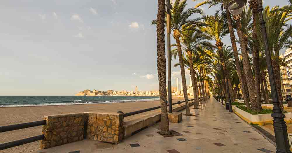 Costa Blanca - Palmen