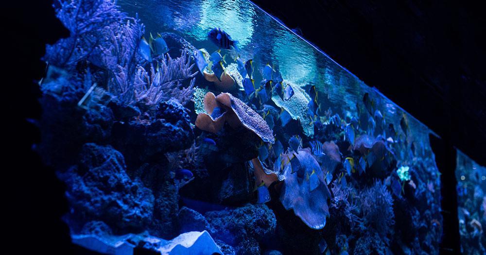 Aquarium Gijon - Fische schwimmen im Aquarium