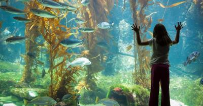 Aquarium Gijon - ein Mädchen bewundert die Fische