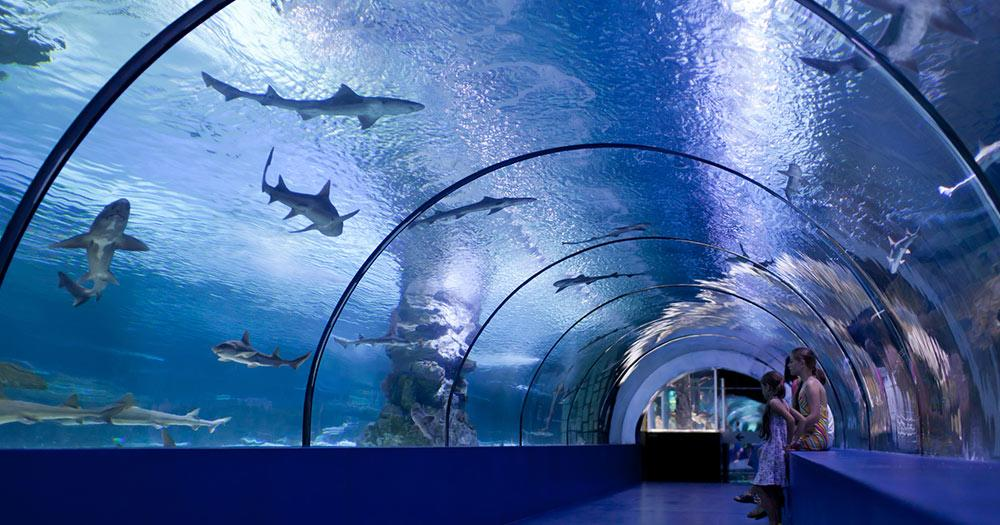 Aquarium Gijon - Kinder in einem Wassertunnel