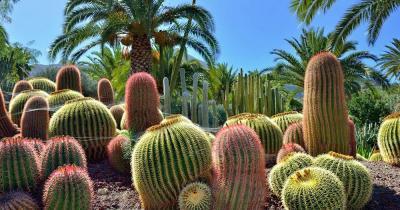Atlantico Botanical - der Kaktusgarten