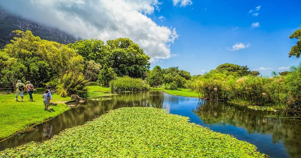Kirstenbosch Botanical - Kirstenbosch Botanical in Kapstadt
