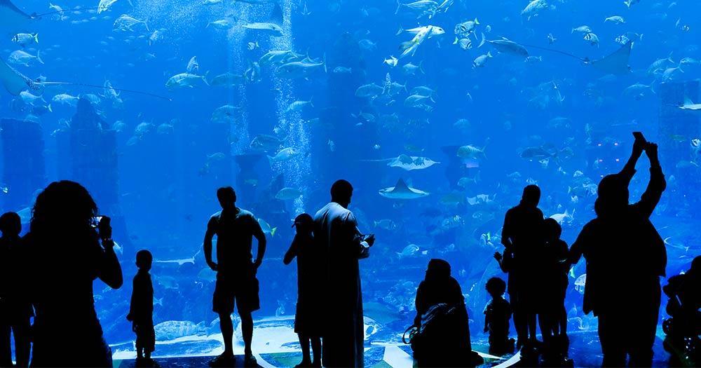 Aquarium Underwaterworld - Publikum vor dem Aquarium
