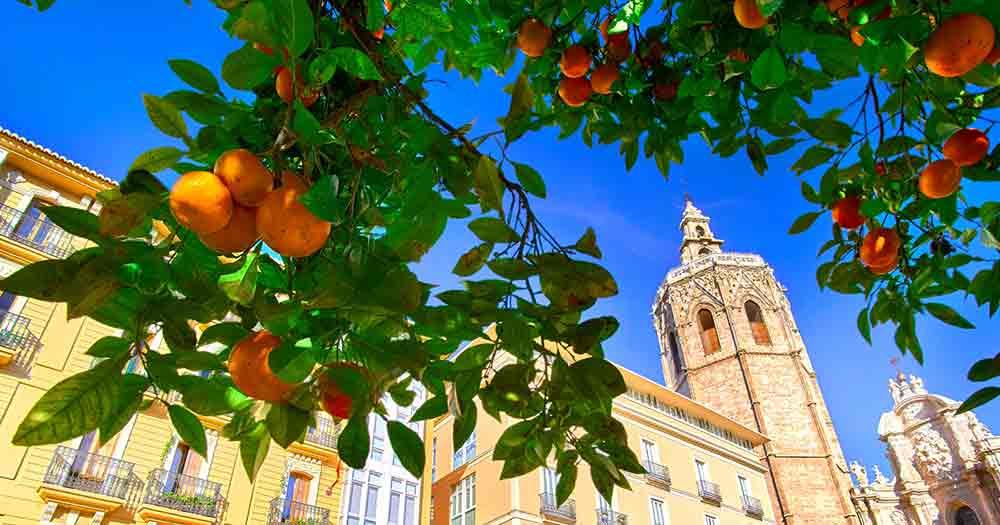 Valencia - Architektur und Orangenbaum