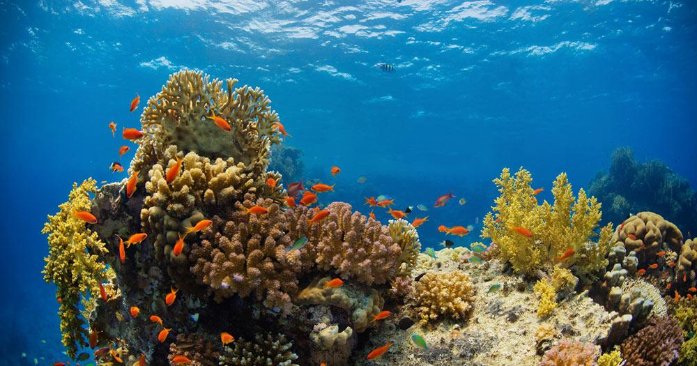 Dschibuti - Traumhafte Tauchreviere mit Korallenriffen