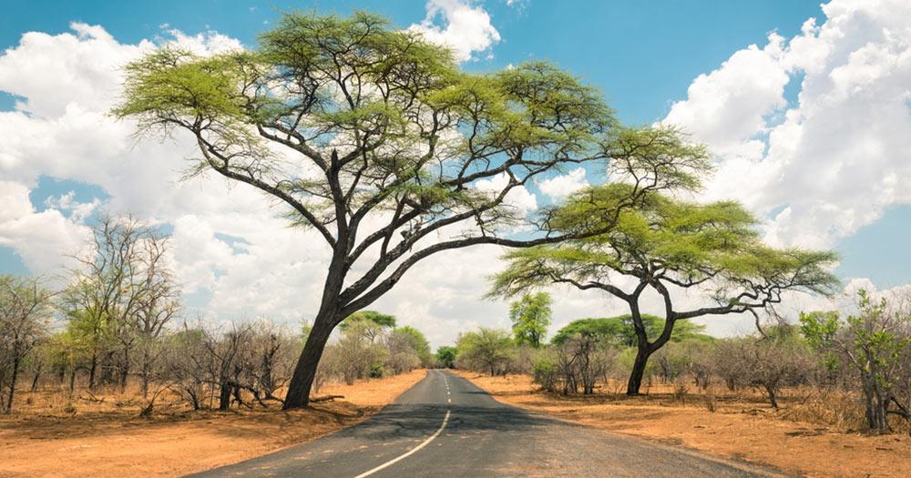 Namibia - Straße in die Savanne