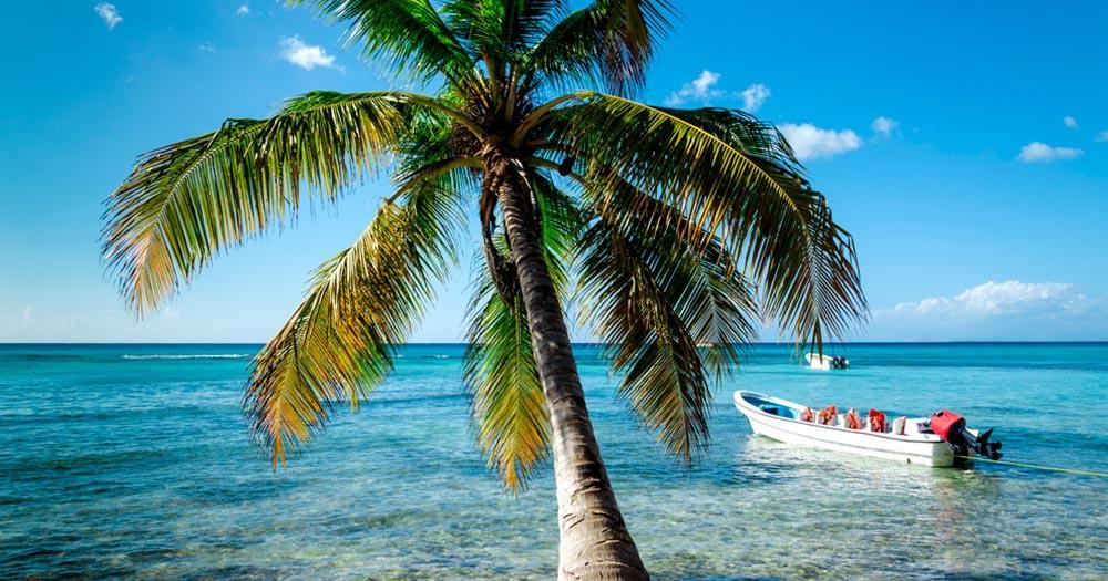 Britische Jungferninseln - Palmen reichen bis in Wasser