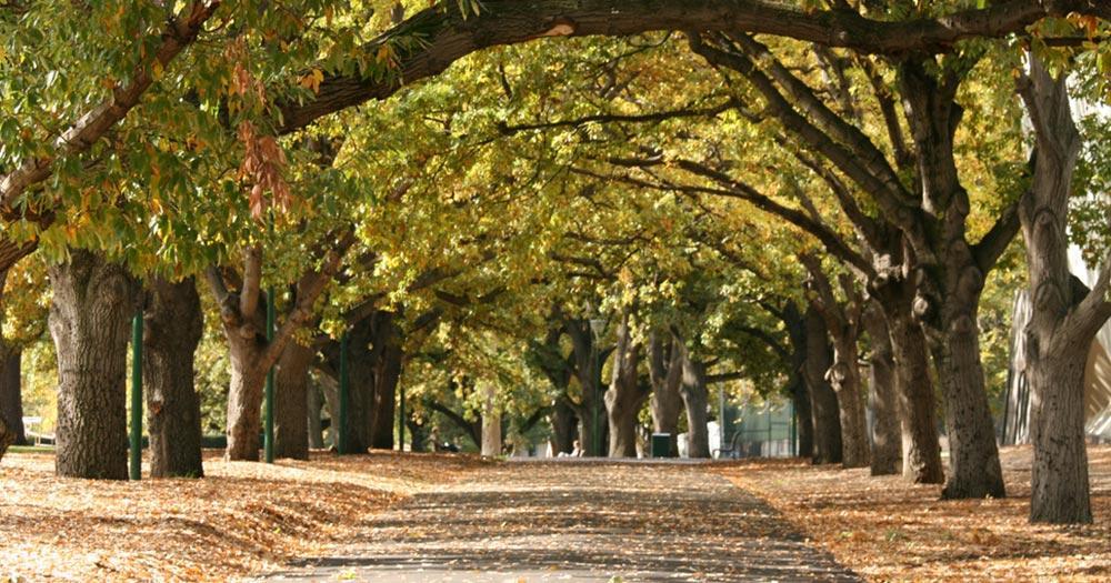 Melbourne - Carlton Gardens