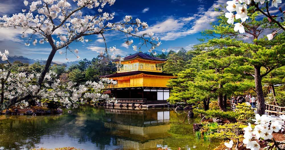 Kyoto - Goldener Tempel mit Kirschblüten