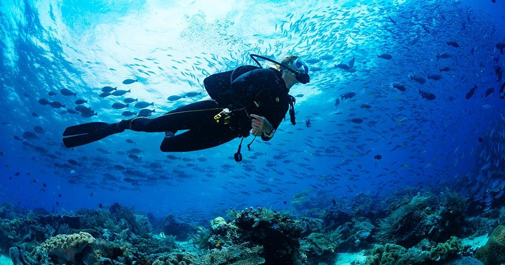 Cenoten - Taucher am Korallriff