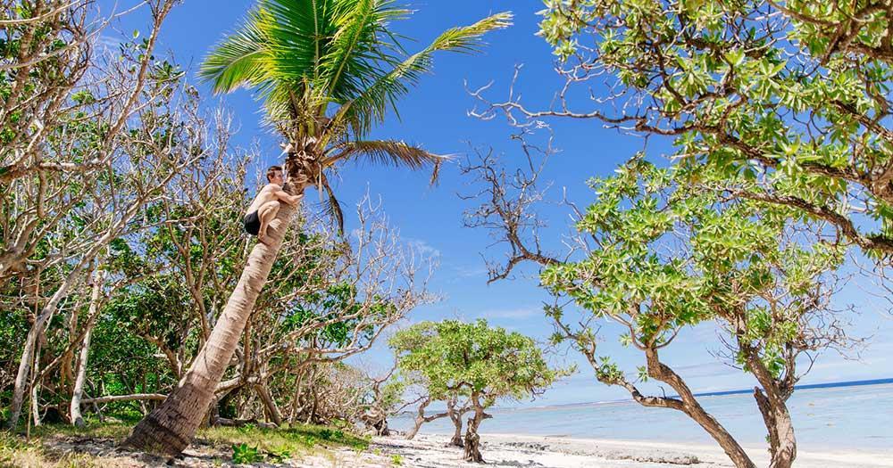 Fidschi Inseln - Kokospalme