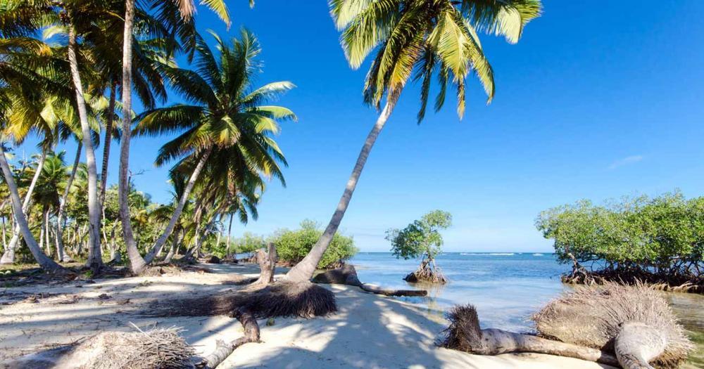 Barbados - Palmenstrand