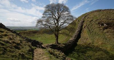 Hadrianswall - mit Baum