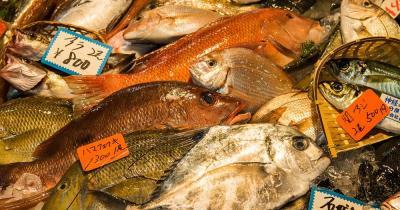 Tsukiji Fischmarkt - div. Fischsorten mit Preisschildern