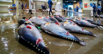 Tsukiji Fischmarkt - Thunfisch Auktion