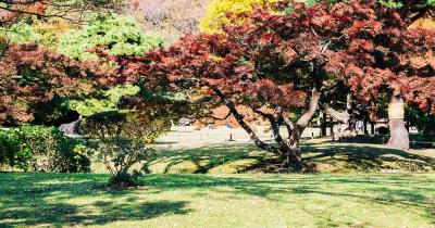 Rikugi-Park - herbstliche Laubbäume