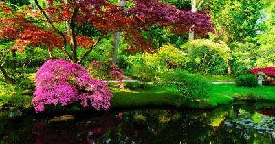 Rikugi-Park - Rosa Strauch am Teich