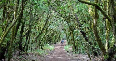 Nationalpark Garajonay - Hohlweg mit Bäumen