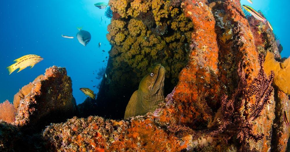 Great Barrier Reef - Korallen