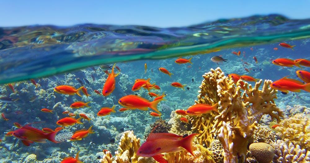 Great Barrier Reef - Unterwasseraufnahmen