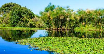 Botanischer Garten Kirstenbosch - Teich mit Pflanzen