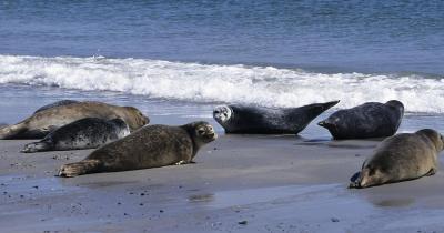 Robben Island - Gruppe von Robben